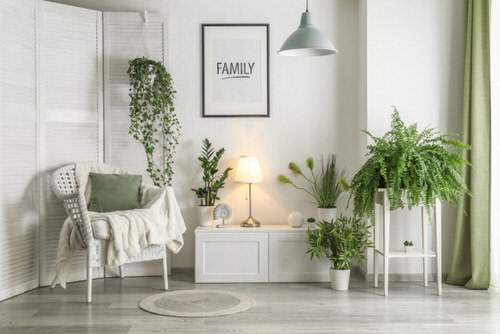 Stylize Your Home with Big and Lush Ferns 5