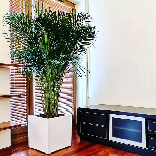 Best Air Purifying Indoor Plants According to an Indian Study