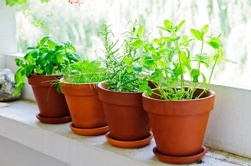 Upcoming 2021 Gardening Trends That You Must Check Out 6