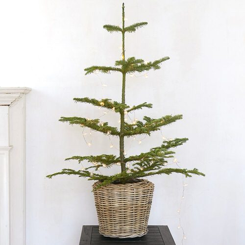 Houseplants That Can be Used as Christmas Tree Alternatives 5