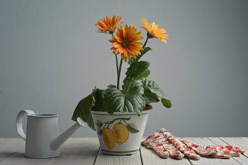 Tips to Correctly Pot Indoor Plants