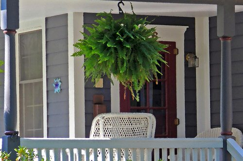 Stylize Your Home with Big and Lush Ferns 11