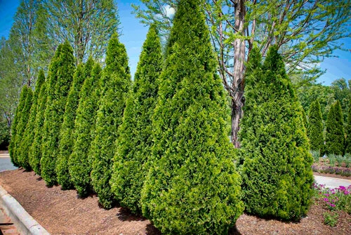Plants You Can Grow Instead of a Fence for Privacy and Lush Green Look