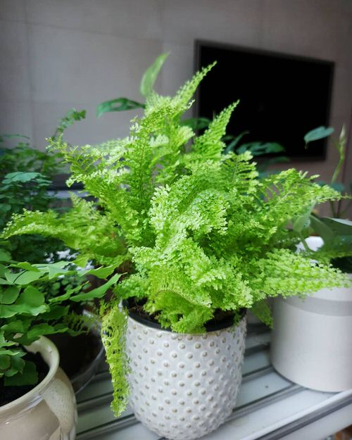 Most Exotic Ferns