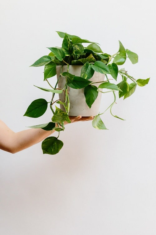 Affordable Houseplants You Can Get So Cheap! Even Free!