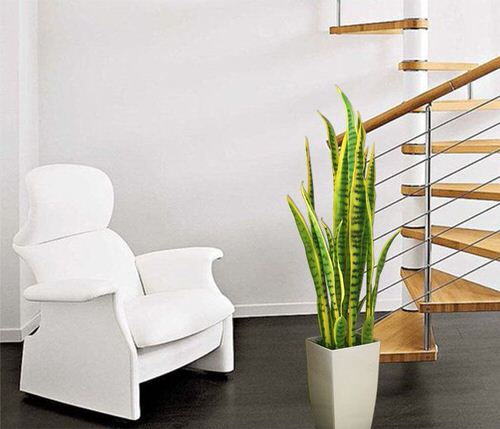 Indoor Plants that are Literally Oxygen Bombs