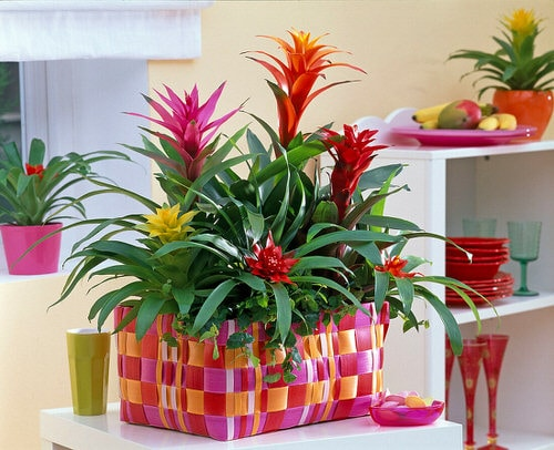 Affordable Houseplants You Can Get So Cheap! Even Free! 5