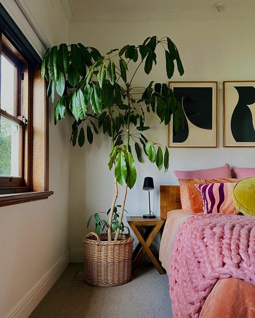 Fast Growing Indoor Plants that Grow Tall 6
