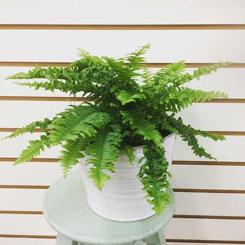 Most Exotic Ferns 6