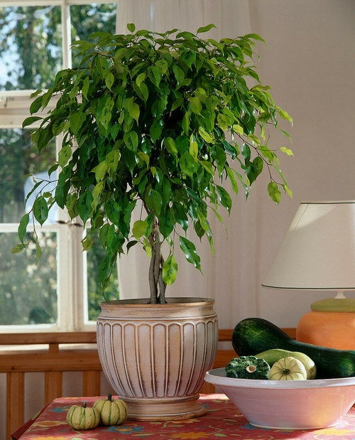 Indoor Plants that are Literally Oxygen Bombs 6