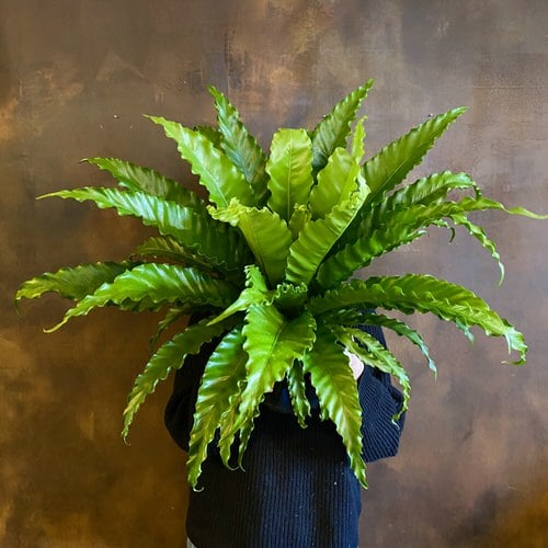 Most Exotic Ferns 7