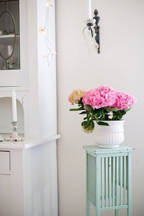 Pictures of Container Gardening with Hydrangeas 7