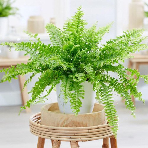 Most Exotic Ferns 9