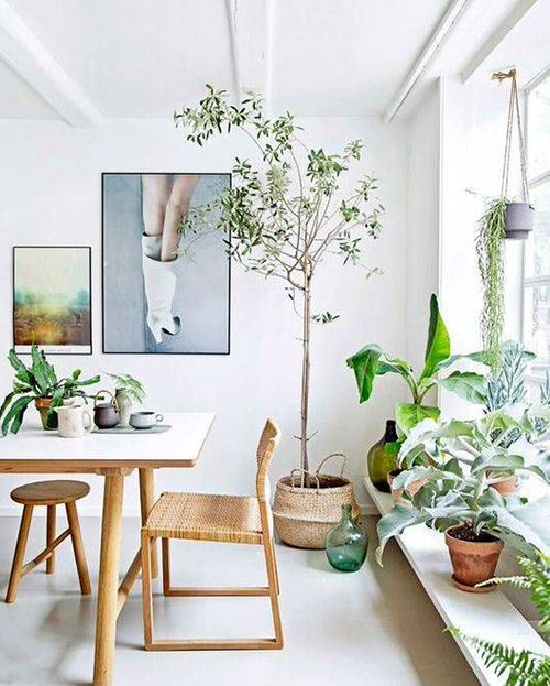 Pictures of House Plants in the Dining Room 10