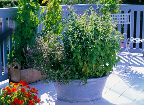 Essential Ingredients You Can Grow in Your Balcony for Powerful Tea