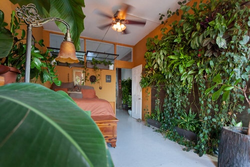 Awesome Indoor Plant Bedroom Pictures 11