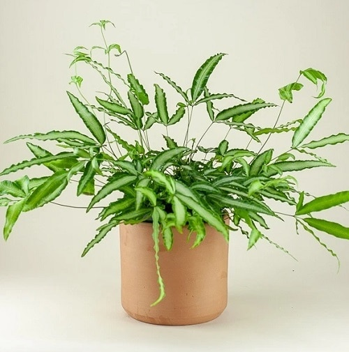 Most Exotic Ferns 12
