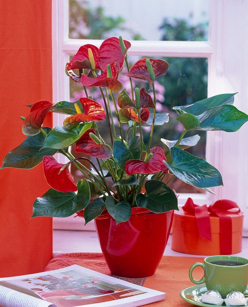 Affordable Houseplants You Can Get So Cheap! Even Free! 2