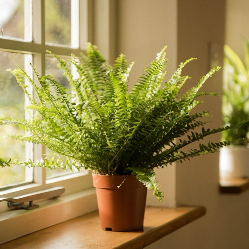 Most Exotic Ferns 2