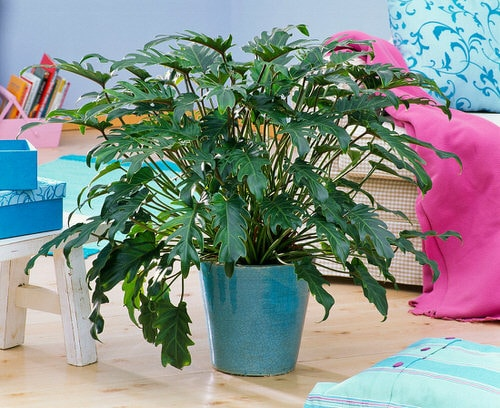 Indoor Plants that are Literally Oxygen Bombs 2