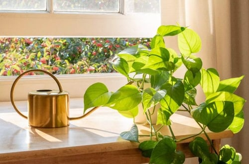 Houseplants that Grow Without Soil 2