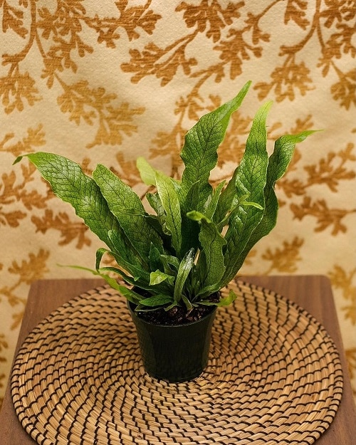 Most Exotic Ferns 15