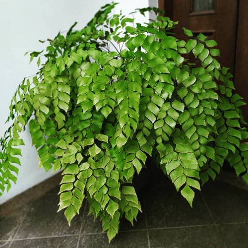 Most Exotic Ferns 18