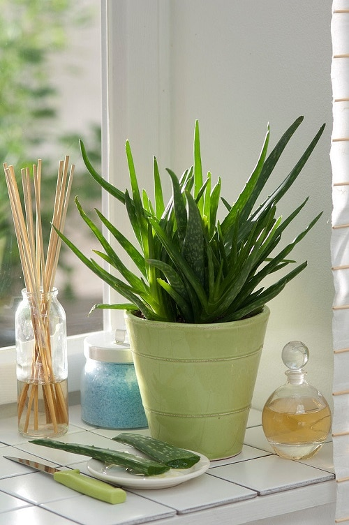 Affordable Houseplants You Can Get So Cheap! Even Free! 3