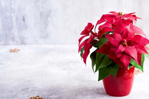 Cute and Romantic Indoor Plants 3