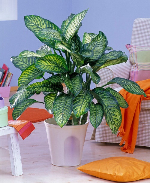 Most Effective CO2 Absorbing Houseplants Proven by Science 3
