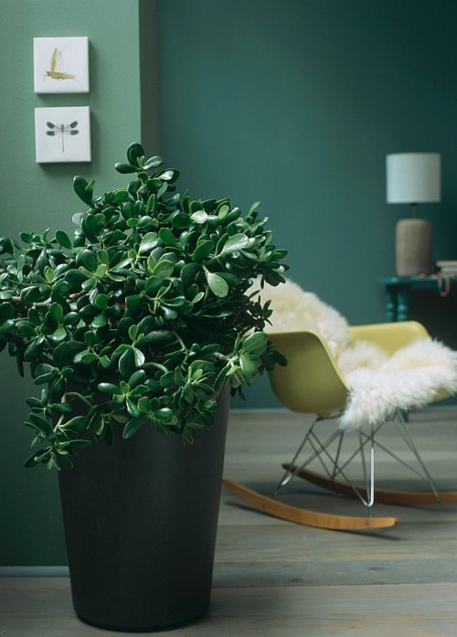 Indoor Plants that are Literally Oxygen Bombs 3