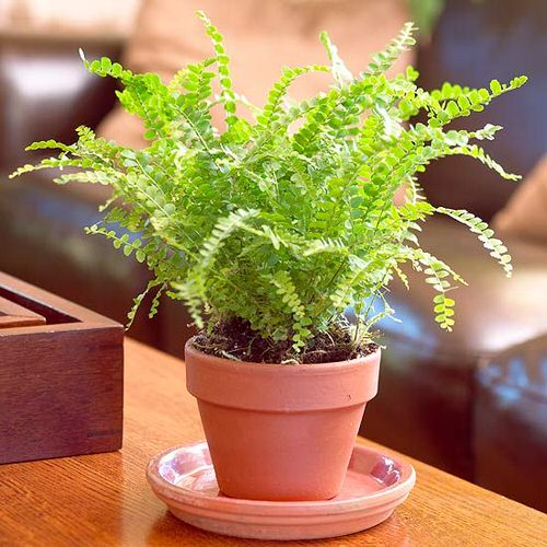 Most Exotic Ferns 3