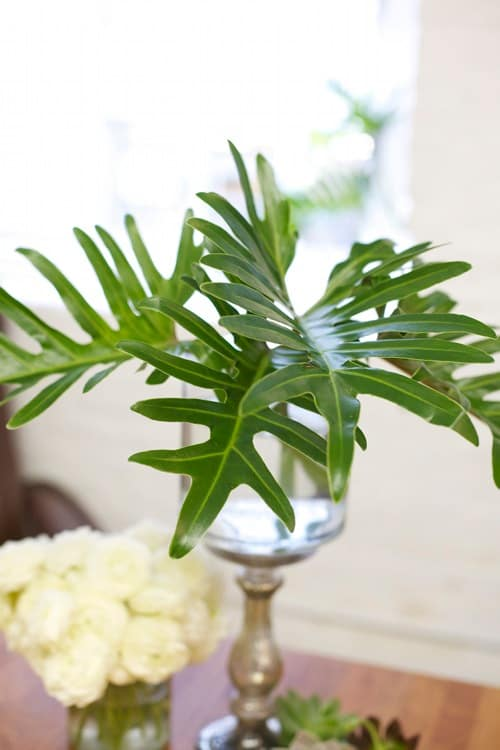 Houseplants that Grow Without Soil 3
