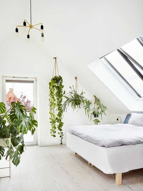Stunning Attic Rooms with Plants Pictures 2