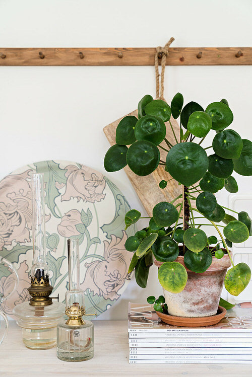 Affordable Houseplants You Can Get So Cheap! Even Free! 4