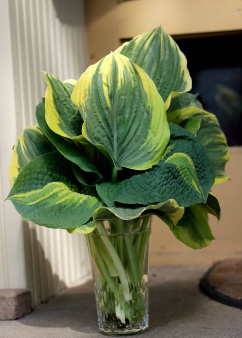 Houseplants that Grow Without Soil 4