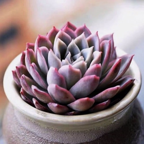 Cute and Romantic Indoor Plants 4