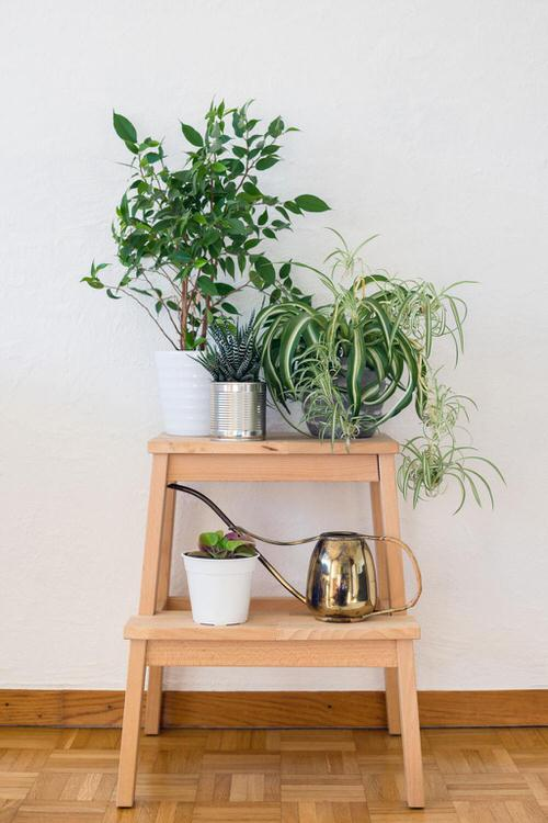 Awesome Spider Plant Pictures that Will Make You Its Super Fan 4