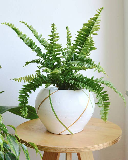 Most Exotic Ferns 5