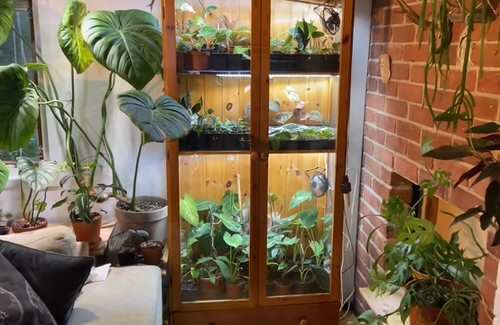 Old Plant Cabinets into Plants Home 5