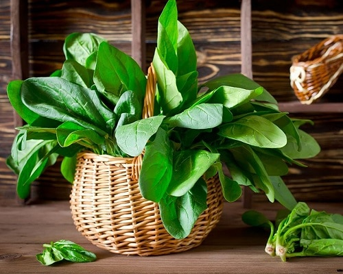 Things You Should Know to Grow Spinach Indoors