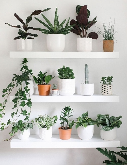 DIY Indoor Plant Display Ideas
