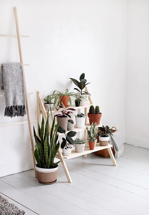 DIY Indoor Plant Display Ideas 3