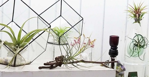 DIY Indoor Plant Display Ideas 4