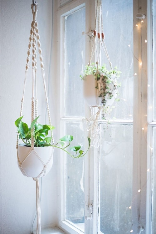 DIY Indoor Plant Display Ideas 5