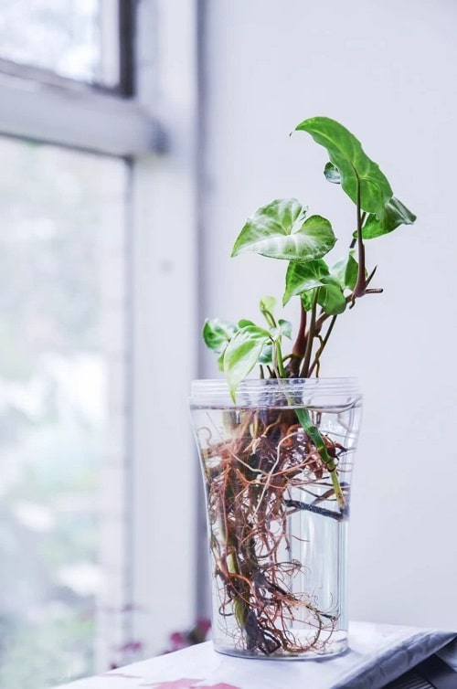 Plants You Can Start with One Cutting and a Glass of Water 8