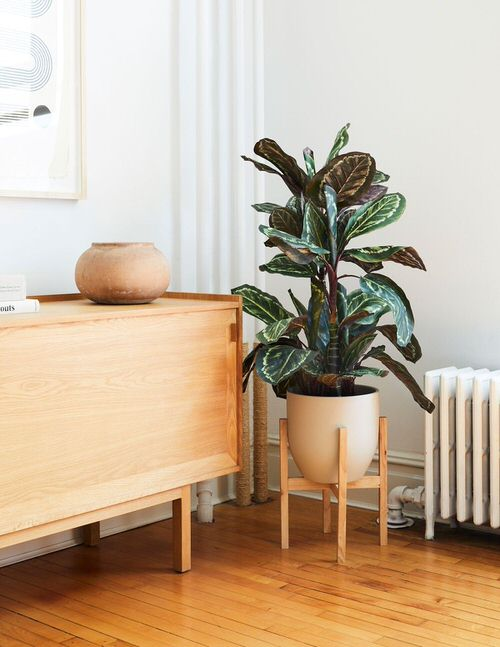 Houseplants that Look Best on Plant Stands 6