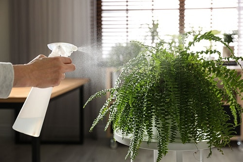 How to Keep your Ferns Lush and Beautiful 2