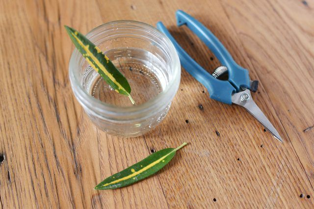 Plants You Can Start with One Cutting and a Glass of Water