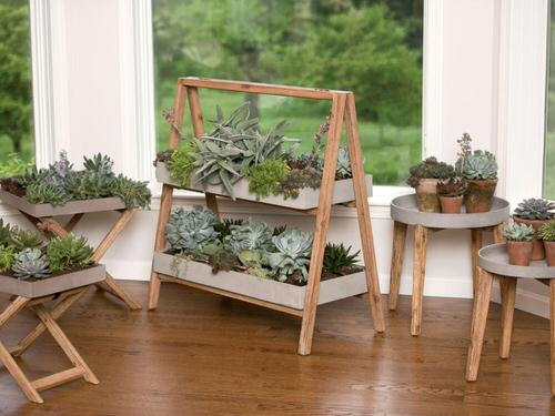 Houseplants that Look Best on Plant Stands 3